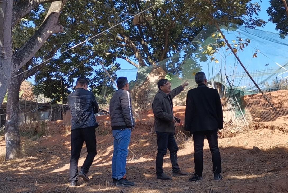 橄榄树 观看_我院倪根金教授受邀赴梅县、丰顺、潮阳三地调查农业遗产